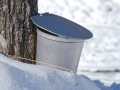 canadian-maple-syrup-buy-online_16