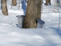 canadian-maple-syrup-buy-online_18